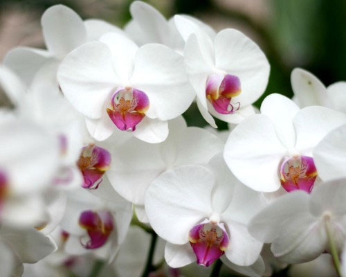 giới kỳ lạ của hoa lan